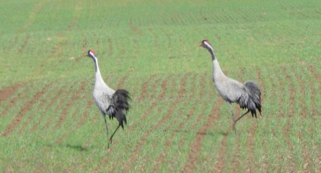 Dzikie ptaki problem miasta